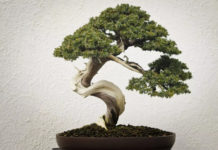 bonsai-starter-kits